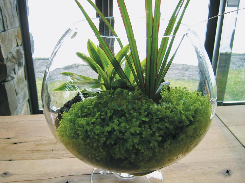 Hasil gambar untuk Selaginella Kraussiana in pot