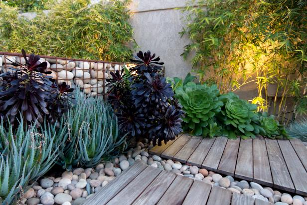 Succulent Garden Feature Rich Green and Purple Toned Plants, Stone Bed and Wooden Platforms