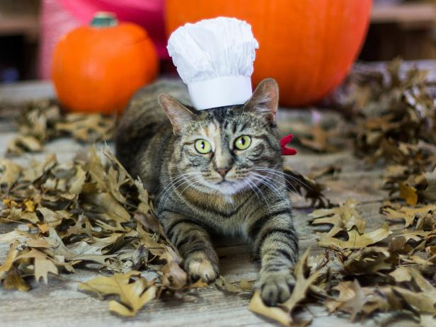 Dress Your Pet - French Chef Costume for Pets