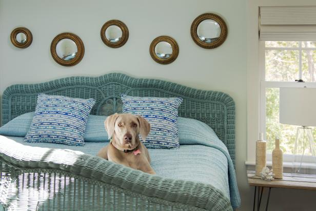 Blue Wicker Bed with Dog