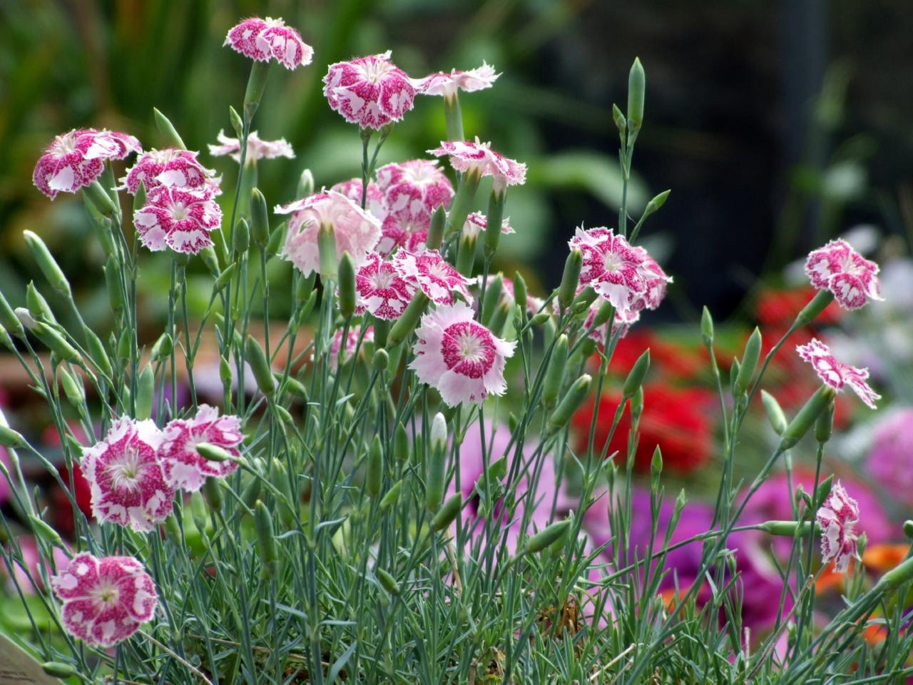 10 Colorful Perennials Diy