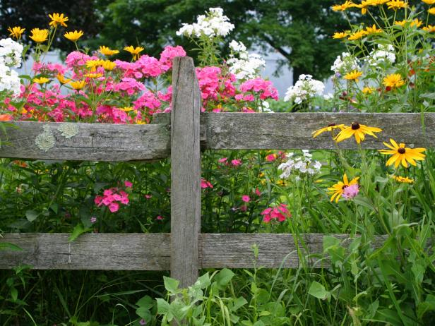 List Of The Best Perennial Flowers Diy