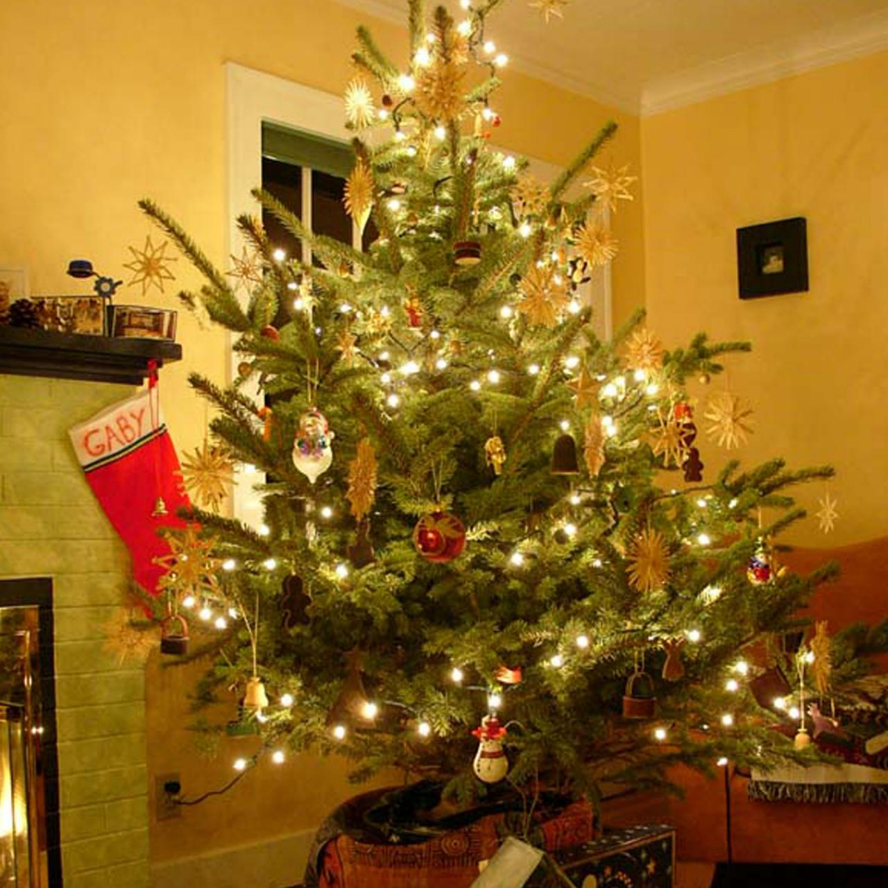 Living Christmas Tree.How To Care For Your Living Christmas Tree Hgtv