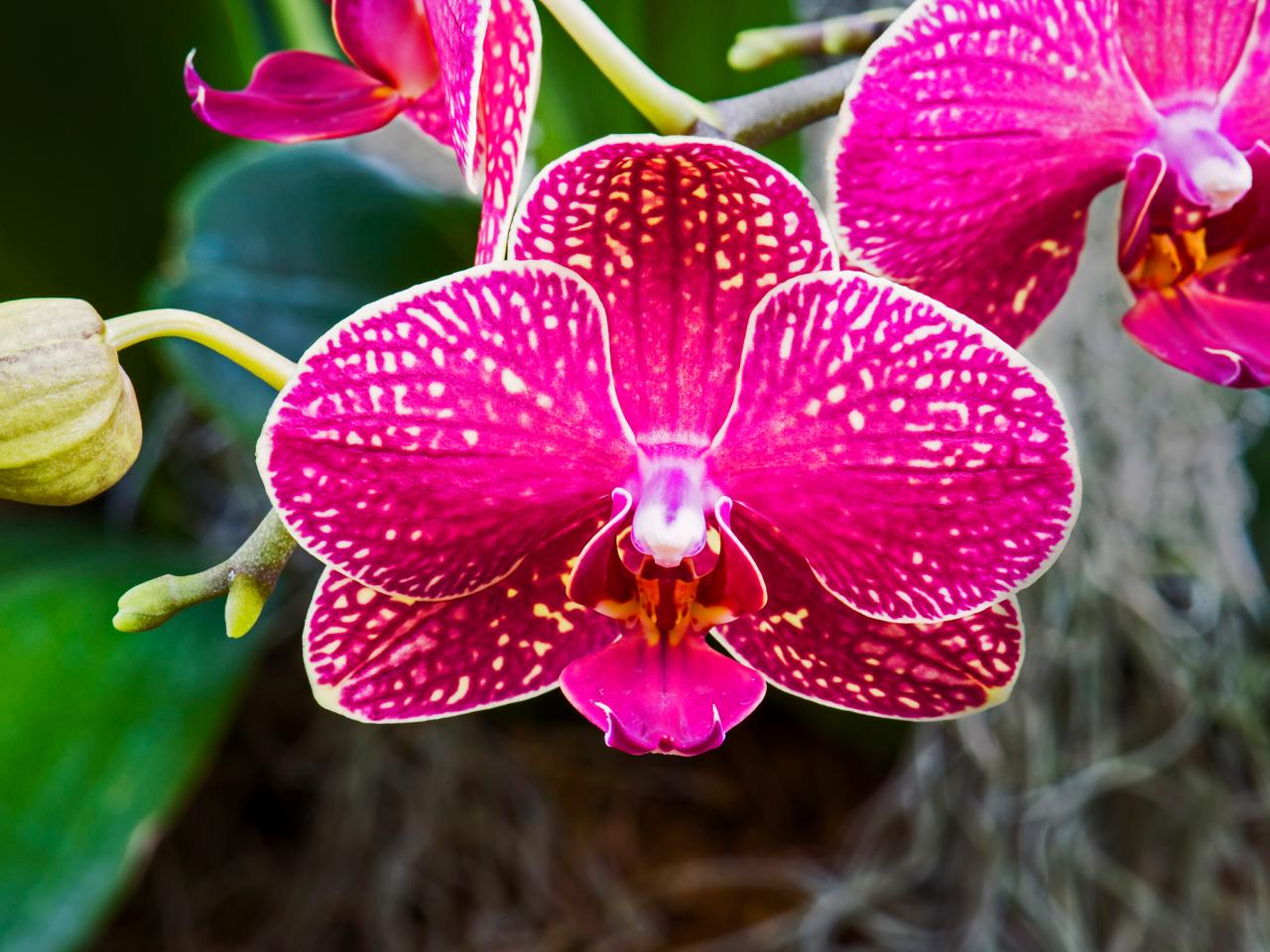 How To Keep Your Orchid Looking Great Diy Network Blog Made