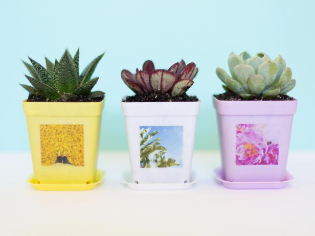 How to Make Succulent Planters With Instagram Photos