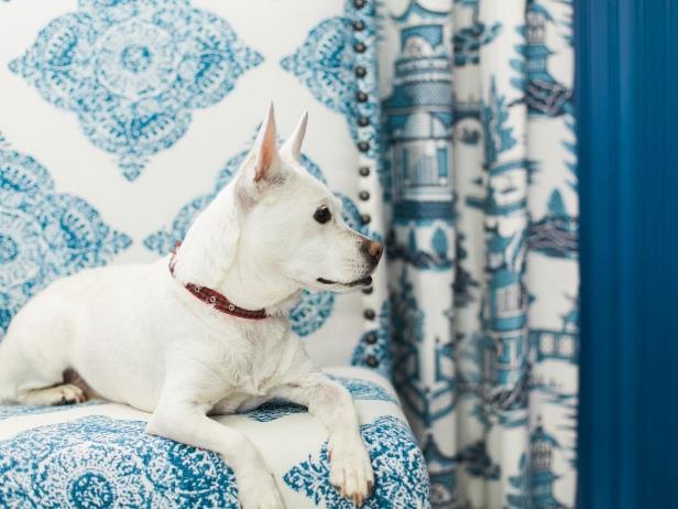 Dog on Blue-and-White Upholstered Chair