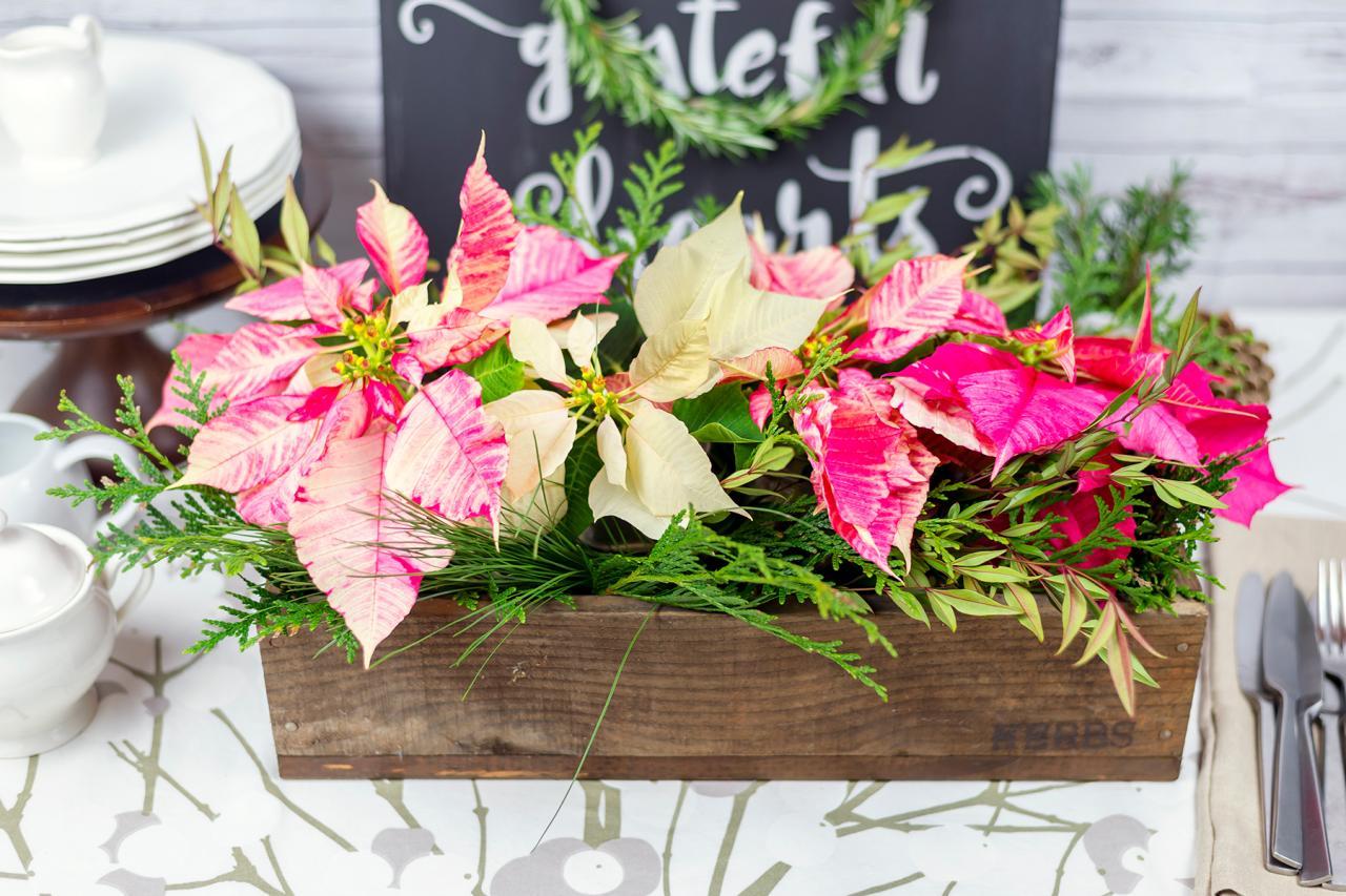 How To Make A Cut Flower Poinsettia Centerpiece Hgtv