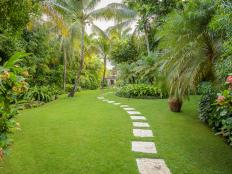 Tranquil, Tropical Garden