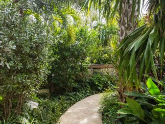 Walkway Surrounded By Lush Vegetation
