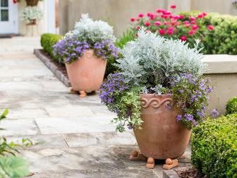 Clay Pots With Purple and Silver Plants