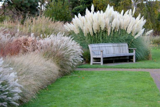 Pampas Grass and Outdoor Bench