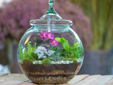 Terrarium with Mini Orchids, Tropical Plants, Fern, Air Plant and Moss