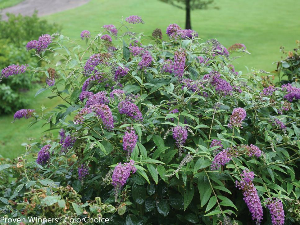 Plant Purple Flowers And Plants In Your Garden Hgtv