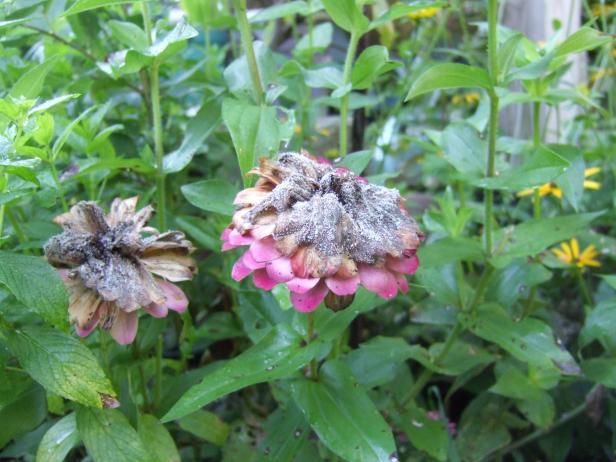 How To Identify Common Plant Diseases