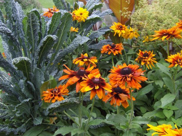 10 Common Garden Mistakes