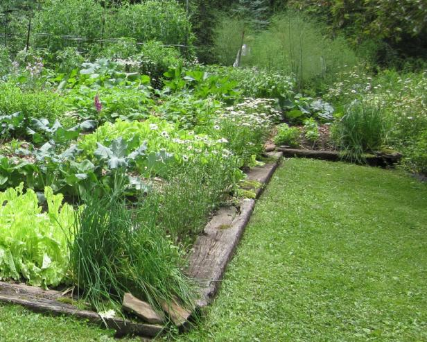 Landscape Edging Ideas Hgtv