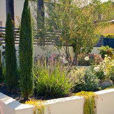 Provencal-Inspired Landscaping
