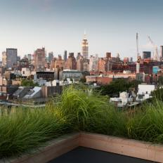 Urban Roof Deck With Grasses