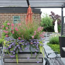 Pink and Purple Container Garden