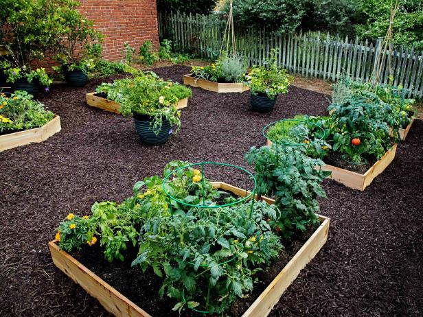 Raised Garden Beds | HGTV