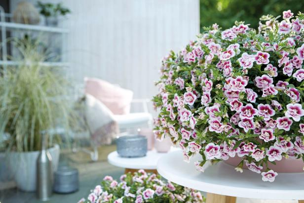 Easy Plants To Grow In Pots Hgtv