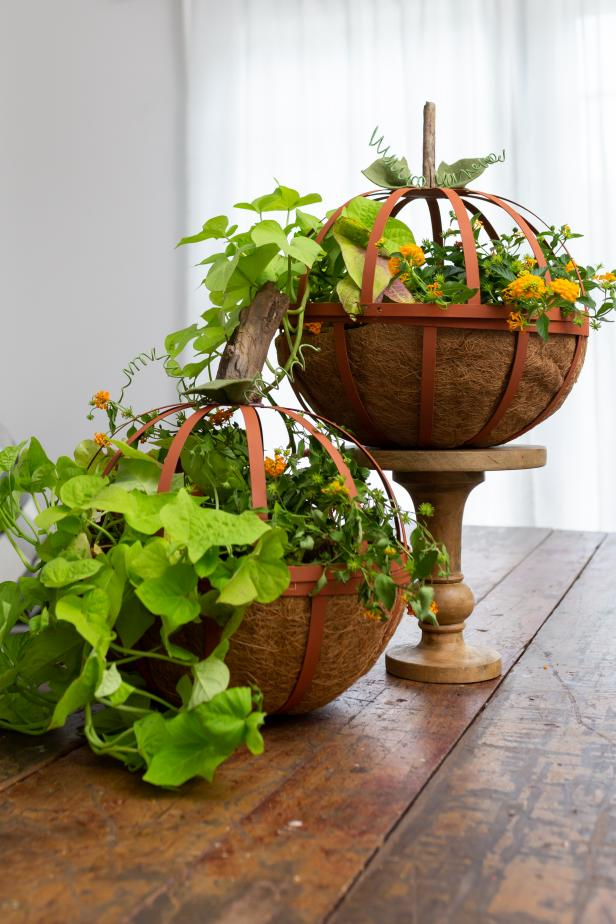 Plants Inside of Metal Pumpkin Planters On a Table