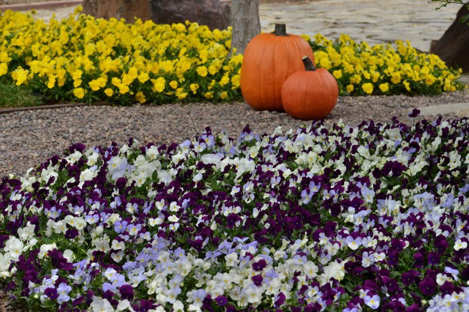 Creative Ideas For Planting Pansies Hgtv