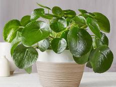 Skip a trip to the garden store and shop these real houseplants from the comfort of home.
