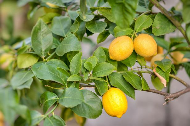 How To Grow The Best Fruit Trees For Your Garden Hgtv