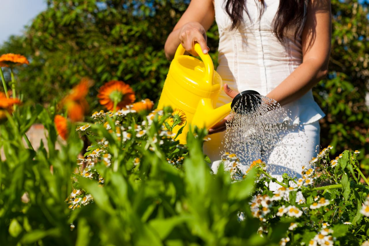 How To Keep Your Garden Watered While On Vacation | HGTV