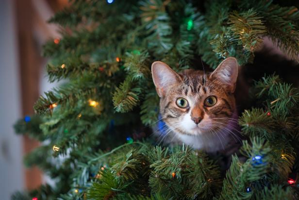 How To Keep Cats Out Of Christmas Trees Hgtv