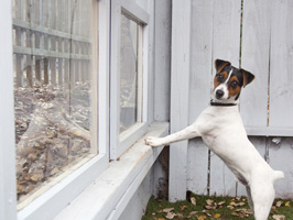 RWAP_pet-friendly-room-dog-window-crop_s266x200
