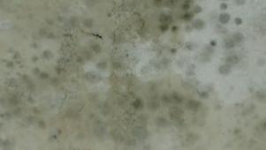 Mold Prevention Methods 02 08