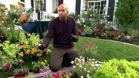 Tips: Annuals and Perennials